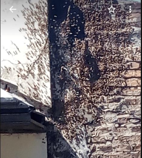 abejas-casa.png